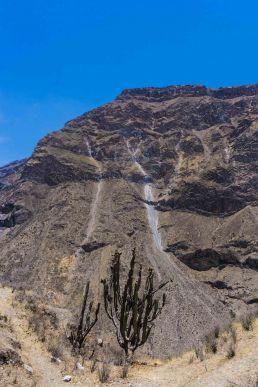 Cactus-Colca-Peru