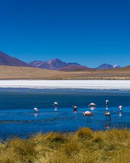 Flamingos near a lagoon in Uyuni